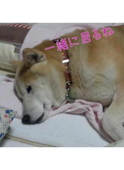 Yurumojicamera